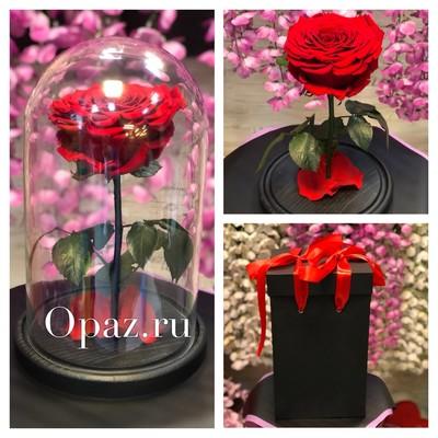 Стабилизированная красная роза