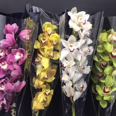 Орхидея ветка 1550руб