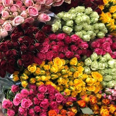 Роза кустовая микс 70см 115руб от 20шт