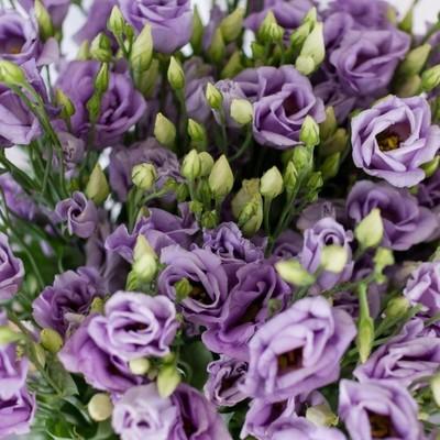 Эустома фиолетовая 89руб от 10шт