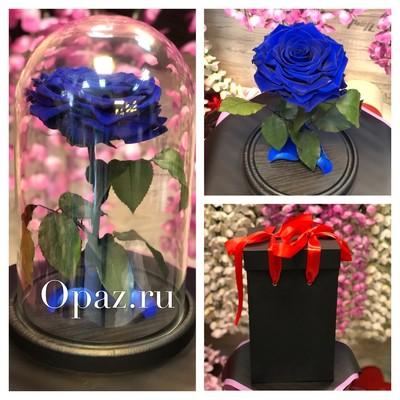 стабилизированная синяя роза