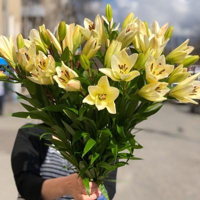 Лилия Азиатская 70см, 99руб 3/5 соцветий на стебле, от 20шт